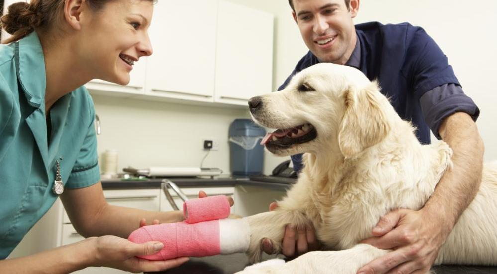 Veterianarian and golden retriever, Pet Pain management, Reisterstown Veterinarian