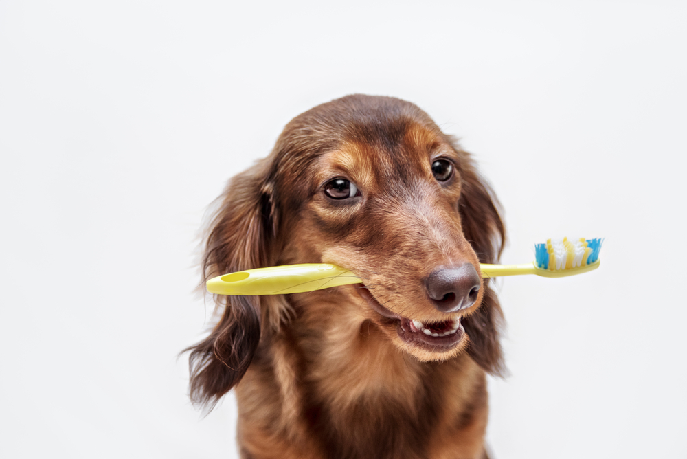 Pet Dental Care With  Reisterstown Veterinarian